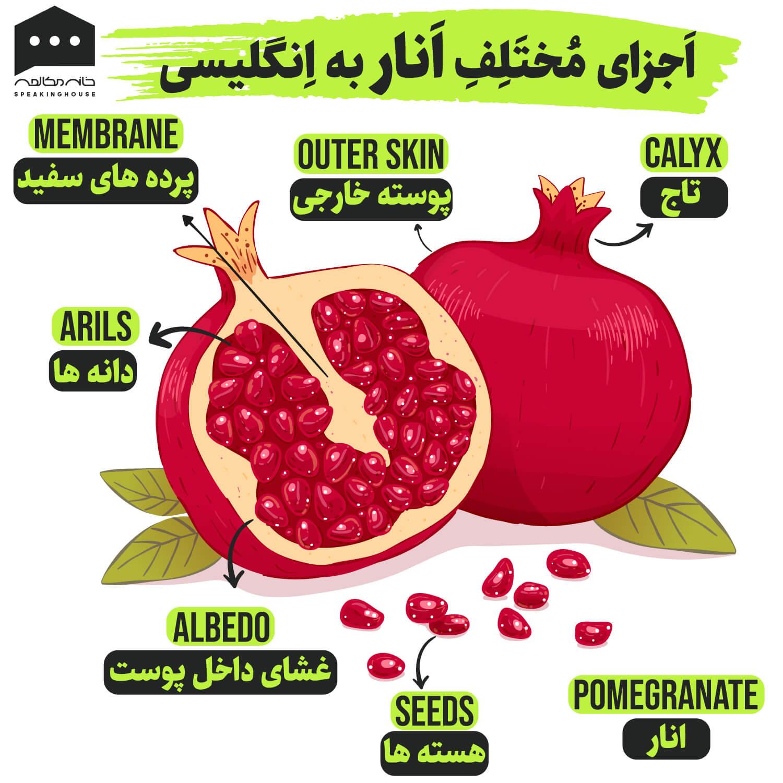 اجزای انار به انگلیسی