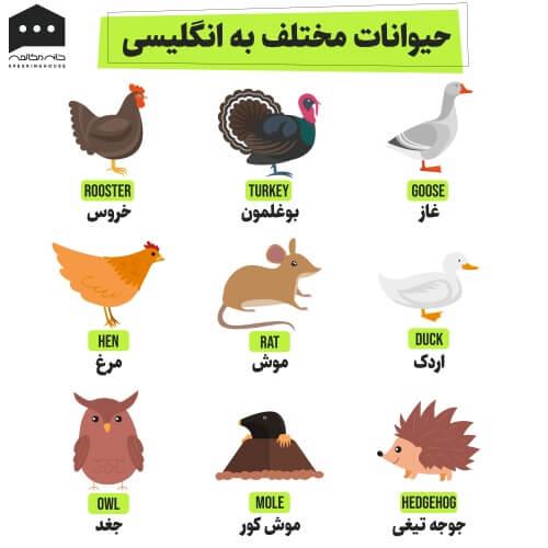 لغات انگلیسی - حیوانات ۱