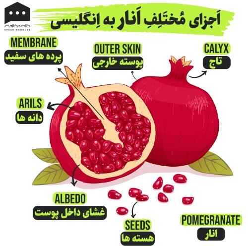 لغت انگلیسی - اجزای انار