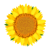 انواع گل ها به انگلیسی