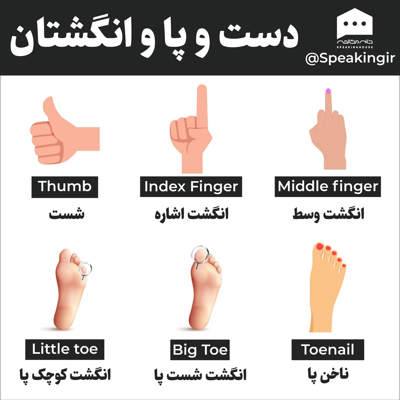 دست و پا و انگشتان به انگلیسی