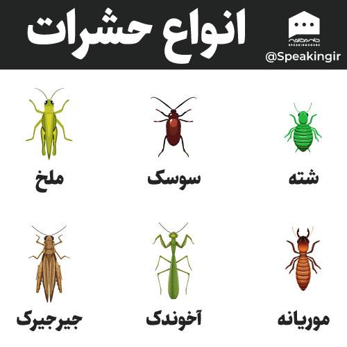 انواع حشرات به انگلیسی
