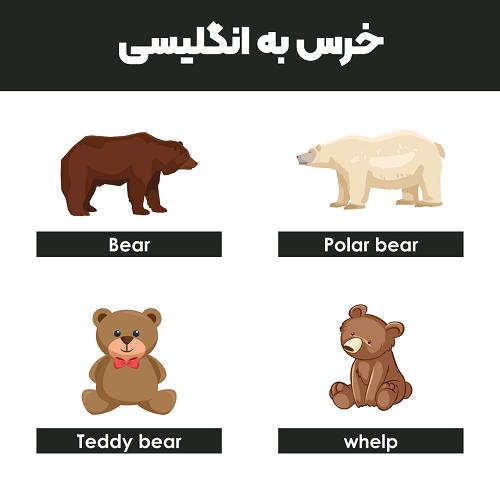 خرس به انگلیسی