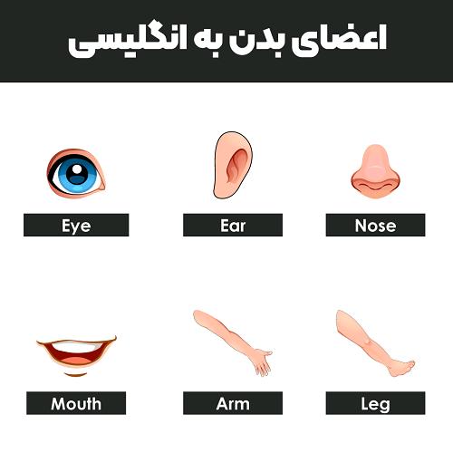 اعضای بدن به انگلیسی